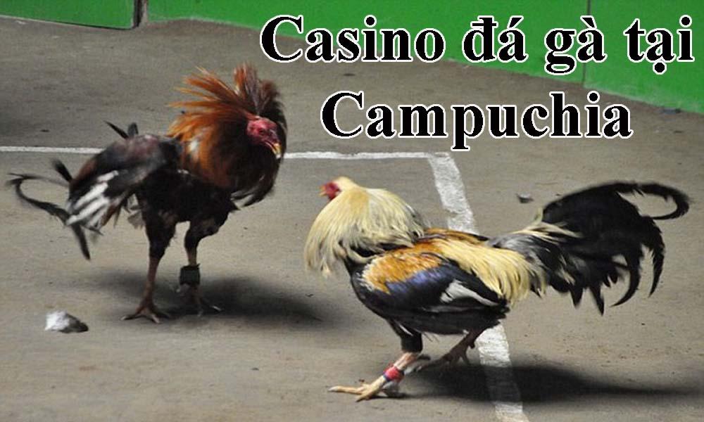 Casino đá gà tại Campuchia