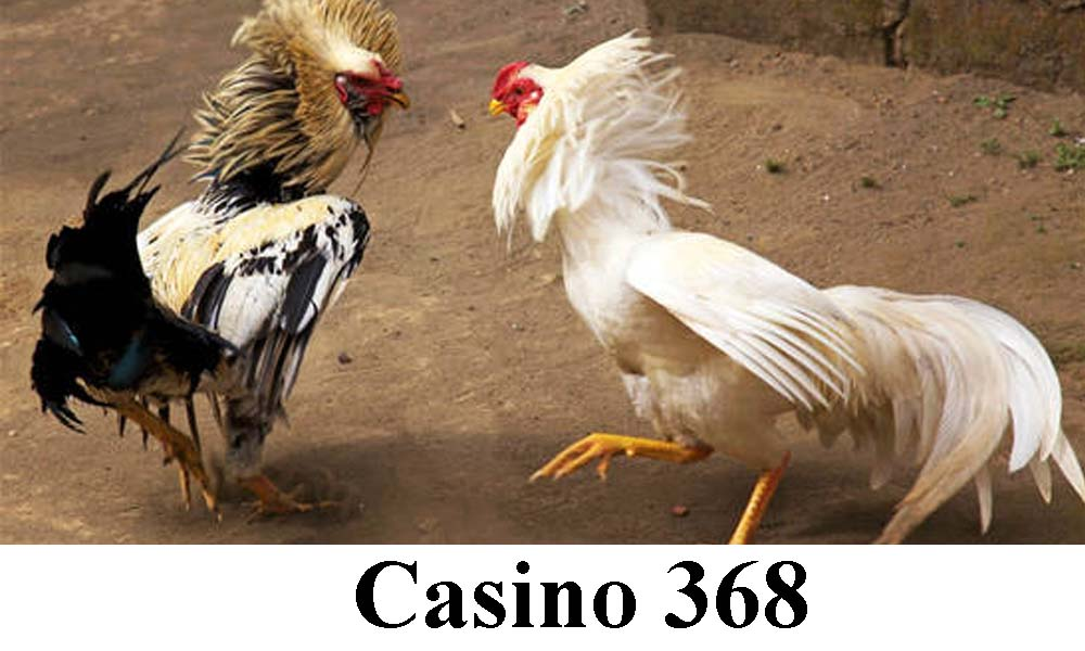 Casino 368