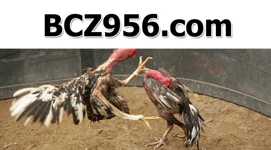 Giới thiệu trang đá gà BCZ956 - Link cá cược SV388 không bị chặn