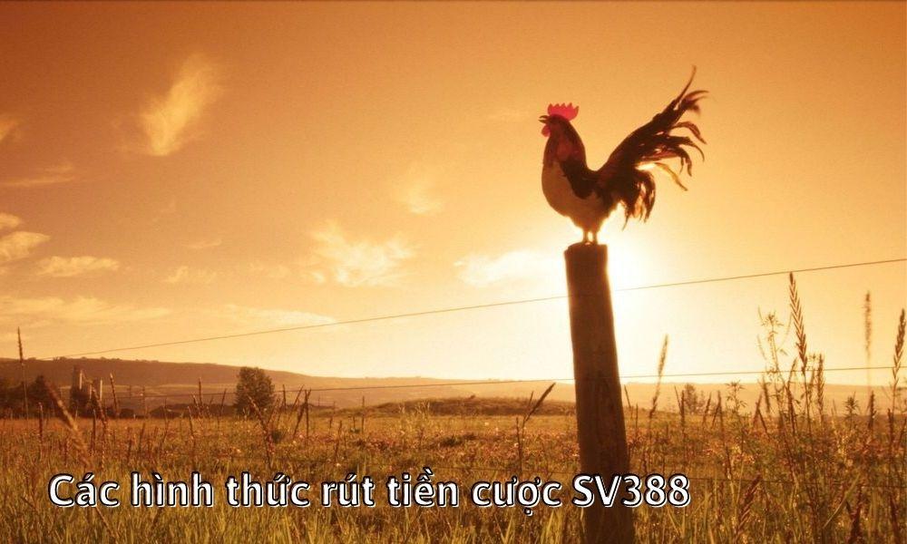 Các hình thức rút tiền cược SV388